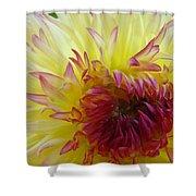 Floral Fine Art Dahlia Flower Yellow Red Prints Baslee Troutman Shower Curtain