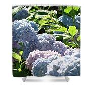 Floral Garden Art Prints Blud Hydrangea Flowers Shower Curtain