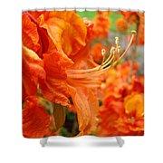 Floral Garden Art Prints Orange Rhododendrons Baslee Troutman Shower Curtain
