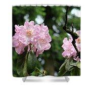 Floral Garden Pink Rhododendron Flowers Baslee Troutman Shower Curtain