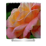 Floral Glow Shower Curtain