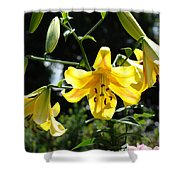 Floral Lilies Art Yellow Lily Flowers Giclee Baslee Troutman Shower Curtain