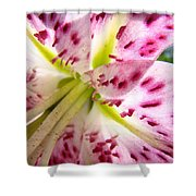 Floral Lily Flower Artwork Pink Calla Lilies Baslee Troutman Shower Curtain
