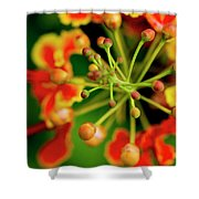 Floral Macro Shower Curtain