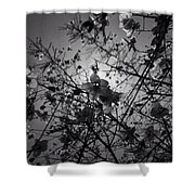 Floral Noon Shower Curtain