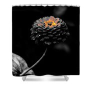 Floral October Zinnia End Of Season Sc 01 Shower Curtain