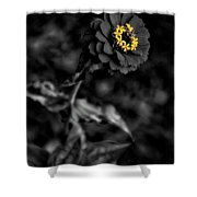 Floral October Zinnia End Of Season Sc 02 Vertical Shower Curtain