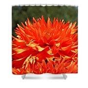 Floral Orange Dahlia Flowers Art Prints Shower Curtain