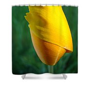 Floral Poppy Flower Poppies Art Prints Giclee Baslee Troutman Shower Curtain