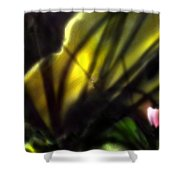 Floral Rays Shower Curtain