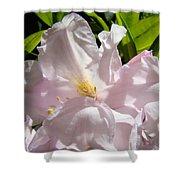 Floral Rhdodendron Flower Art Print Pink Sunlit Rhodies Baslee Shower Curtain