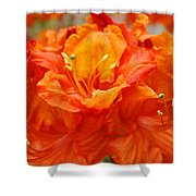 Floral Rhodies Art Prints Orange Rhododendrons Canvas Art Baslee Troutman Shower Curtain