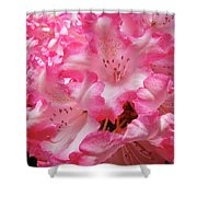 Floral Rhodies Flowers Pink White Art Baslee Troutman Shower Curtain