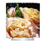 Floral Roses Garden Art Prints Baslee Troutman Shower Curtain