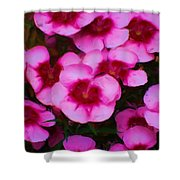 Floral Study In Red And Pink Shower Curtain