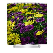 Floral Treasure Shower Curtain