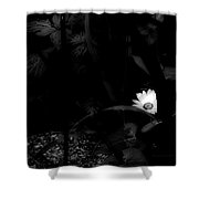 Floral Yellow Peek A Boo Bw Shower Curtain