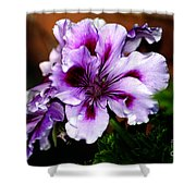 Florals Shower Curtain