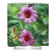 Flores De La Allamanda Shower Curtain