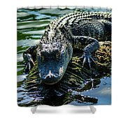 Florida Alligator Shower Curtain