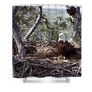 Florida: Bald Eagles, 1983 Shower Curtain