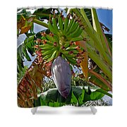 Florida Banana Flower And Fruit Shower Curtain