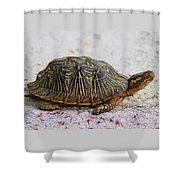 Florida Box Turtle Shower Curtain
