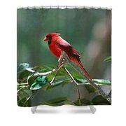 Florida Cardinal Shower Curtain