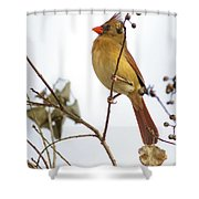 Florida Cardinal Shower Curtain