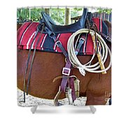 Florida Cracker Cow Whip Shower Curtain