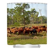 Florida Cracker Cows #1 Shower Curtain