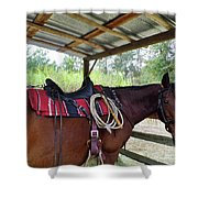 Florida Cracker Horse Shower Curtain