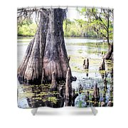 Florida Cypress, Hillsborough River, Fl Shower Curtain