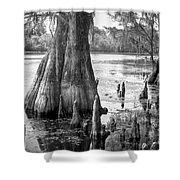 Florida Cypress, Hillsborough River, Fl In Black And White Shower Curtain