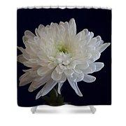Florida Flowers - White Gerbera Ready For Full Bloom Shower Curtain