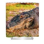 Florida Gator 1 Shower Curtain