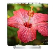 Florida Hibiscus Shower Curtain