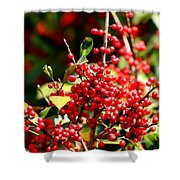 Florida Holly Berry's  Shower Curtain