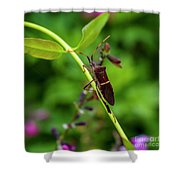 Florida Leaf-footed Bug Shower Curtain