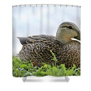 Florida Mallard Shower Curtain