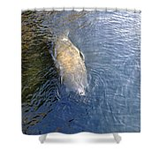 Florida Manatee Shower Curtain