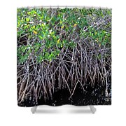 Florida - Mangroves Shower Curtain