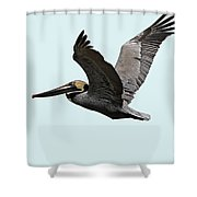Florida Pelican In Flight Shower Curtain