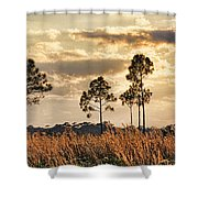 Florida Pine Landscape By H H Photography Of Florida Shower Curtain