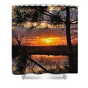 Florida Pine Sunset Shower Curtain