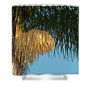 Florida Queen Palm Flower   Shower Curtain