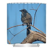Florida Scrub Jay Watching The Lay Of The Scrub Shower Curtain