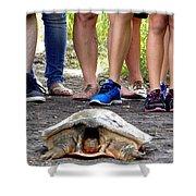 Florida Softshell Turtle 003 Shower Curtain