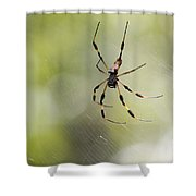 Florida Spider Shower Curtain