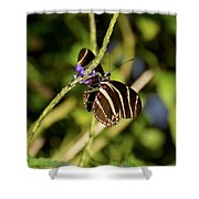 Florida State Butterfly Shower Curtain